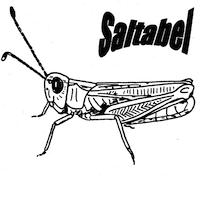 Saltabel - Orthoptera in Belgium