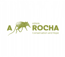 A list of coleoptera recorded in Mixed Forest habitat in Arabuko-Sokoke Forest, Kenya