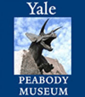 Vertebrate Paleontology Division, Yale Peabody Museum