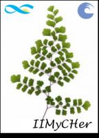 Colección de Lycophyta, Monilophyta, Gimnospermas y Angiospermas Monocotiledóneas del Herbario MDQ de Plantas Vasculares del Instituto de Investigaciones Marinas y Costeras (IIMyC, UNMdP-CONICET/FCEyN).