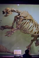 Harvard University Museum of Comparative Zoology