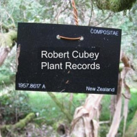 Robert Cubey